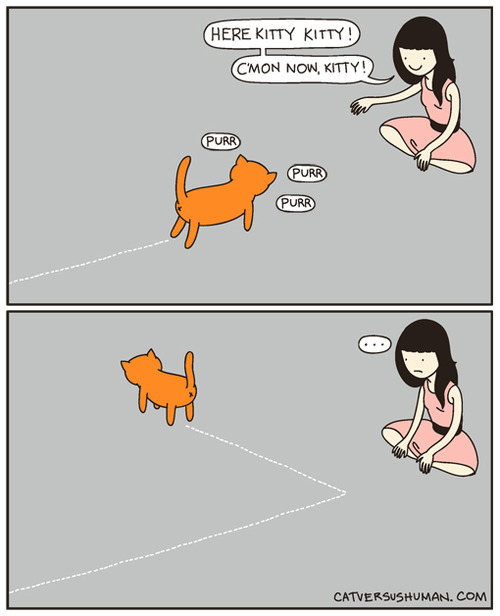 Chat méprisant