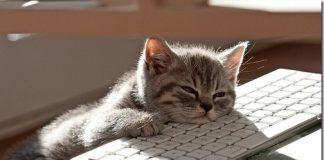 Chaton dormant sur le clavier d'ordinateur