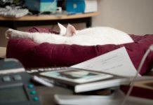 Chat fatigué au bureau