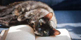 Chat allongé sur un livre