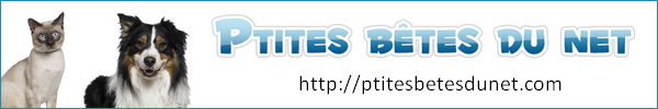Forum Petites bêtes du net