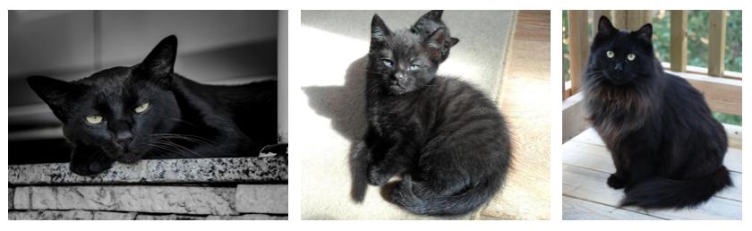 Différentes robes de chats noirs
