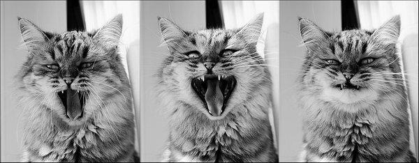 Expressions de chat