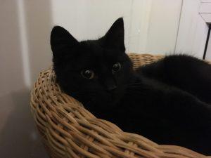 Hibou, chat de Stella