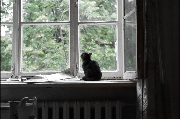 Chat noir regardant par la fenêtre