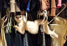 Chat bloqué dans les cintres