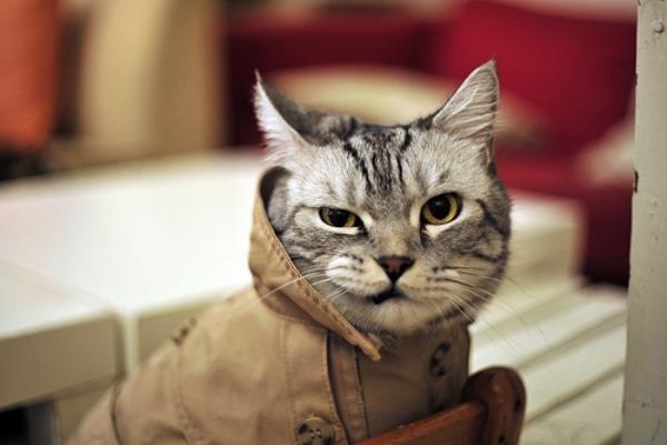 Chat en manteau