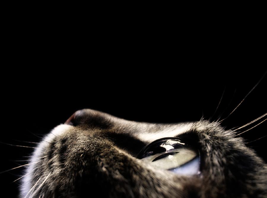 Coupe en très gros plan d'un visage de chat