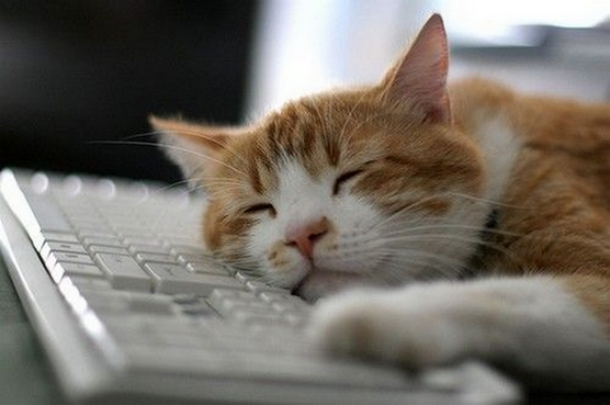 Chat dormant sur le clavier d'ordinateur