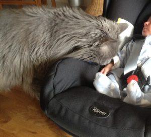 Chat rencontre bébé
