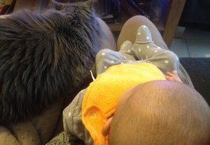 Chat approche bébé