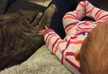 Câlin de bébé avec le chat
