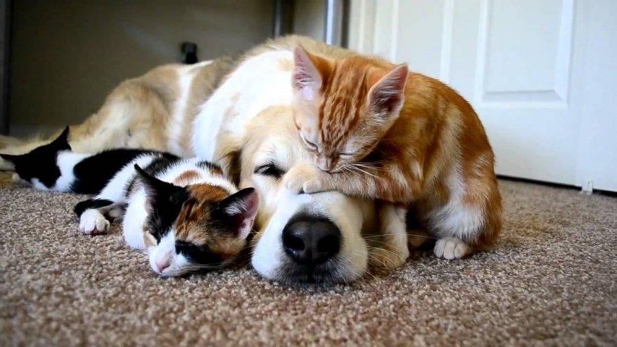 Chatons et chien