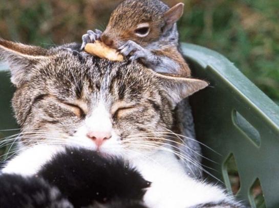 Chat et écureuil