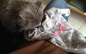 Chat reniflant le pyjama du bébé
