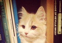 Chat dans la bibliothèque