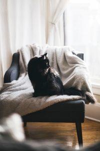 Chat noir sur fauteuil