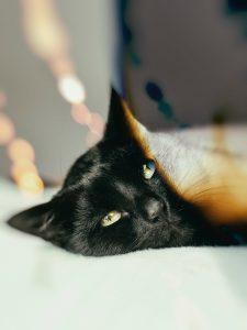 Chat noir et blanc de lumière
