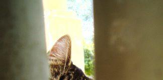 Ouverture de chat parle des chats
