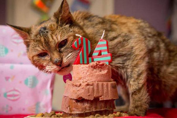 Gateau anniversaire Poppy