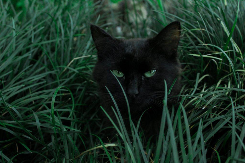 Chat noir vu comme maléfique